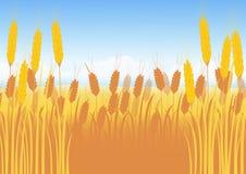 Campo de trigo en un fondo del cielo azul Foto de archivo