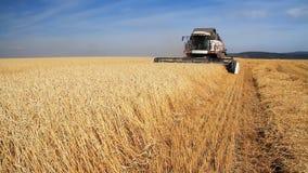 Campo de trigo Estación de la cosecha del trigo metrajes