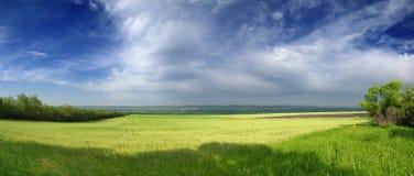 Campo de trigo grande y cielo azul Fotografía de archivo libre de regalías