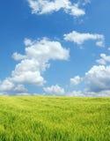 Campo de trigo hermoso Fotos de archivo