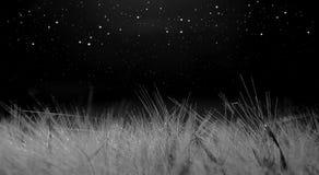 Campo de trigo iluminado por el claro de luna, fondo oscuro con las estrellas Foto de archivo