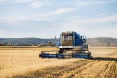 Campo de trigo maduro de oro de la cosecha mecánica de la agricultura de la máquina segadora imagen de archivo