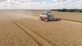 Campo de trigo maduro de oro de la cosecha mec?nica de la agricultura de la m?quina segadora Agricultura Silueta del hombre de ne almacen de video