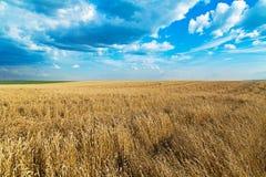 Campo de trigo maduro sobre o céu azul Paisagem agricultural Fotos de Stock