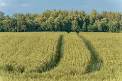 Campo de trigo na área rural lithuania imagens de stock
