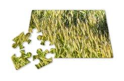 Campo de trigo na forma do enigma - imagem do conceito foto de stock