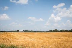 Campo de trigo no coração fotografia de stock