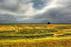 Campo de trigo no hdr Fotos de Stock