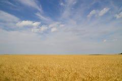 Campo de trigo no nascer do sol Fotografia de Stock Royalty Free