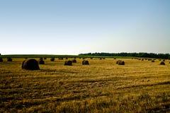 Campo de trigo no por do sol Imagens de Stock Royalty Free