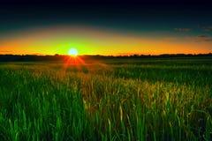 Campo de trigo no por do sol, agricultura, paisagem Fotos de Stock