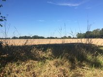 Campo de trigo pela pista do país Imagem de Stock Royalty Free