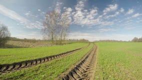 Campo de trigo de primavera y nubes hermosos, lapso de tiempo metrajes