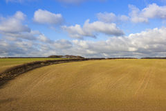 Campo de trigo recentemente semeado Fotos de Stock Royalty Free