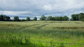 Campo de trigo rodeado por Forrests Foto de archivo libre de regalías