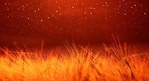 Campo de trigo rojo cubierto con la luz, fondo del ultrawide Imagen de archivo