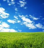 Campo de trigo sobre el cielo azul Imagen de archivo