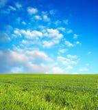 Campo de trigo sobre el cielo azul Fotografía de archivo