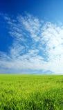 Campo de trigo sobre o céu azul Fotografia de Stock Royalty Free