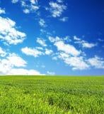 Campo de trigo sobre o céu azul imagens de stock royalty free