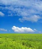 Campo de trigo sobre o céu azul imagem de stock