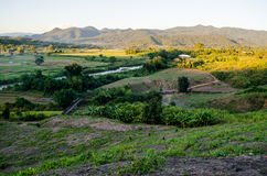 Campo de trigo tailandés Fotos de archivo libres de regalías