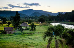 Campo de trigo tailandés Imagen de archivo