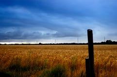 Campo de trigo tempestuoso Foto de archivo libre de regalías