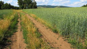 Campo de trigo verde filme