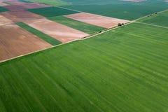 Campo de trigo verde aéreo Grande campo verde da vista aérea imagens de stock