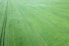 Campo de trigo verde aéreo Campo verde grande de la visión aérea Fotografía de archivo