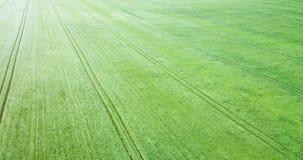 Campo de trigo verde aéreo Campo verde grande de la visión aérea Fotografía de archivo libre de regalías
