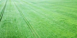 Campo de trigo verde aéreo Campo verde grande de la visión aérea Foto de archivo libre de regalías