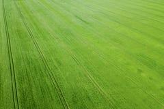 Campo de trigo verde aéreo Campo verde grande de la visión aérea Imágenes de archivo libres de regalías
