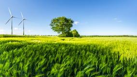 Campo de trigo verde com árvore, o céu azul e as rodas de vento Imagem de Stock Royalty Free