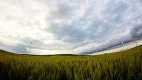 Campo de trigo verde con las turbinas de viento metrajes