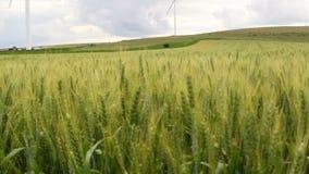 Campo de trigo verde en el movimiento con las turbinas de viento en el fondo metrajes