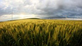 Campo de trigo verde no movimento com as turbinas eólicas no fundo filme