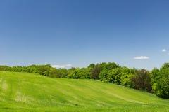 Campo de trigo verde novo Imagens de Stock