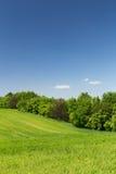 Campo de trigo verde novo Imagem de Stock Royalty Free