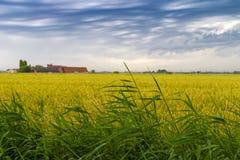 Campo de trigo verde sob céus dramáticos tormentosos na costa belga fotos de stock royalty free