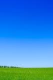 Campo de trigo verde y cielo azul. Fondo del paisaje Foto de archivo