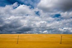 Campo de trigo y cielo azul con las nubes Foto de archivo libre de regalías