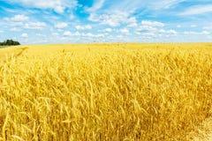 Campo de trigo y cielo nublado fotografía de archivo libre de regalías