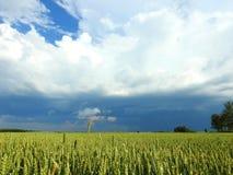 Campo de trigo y cielo nublado hermoso, Lituania Imagenes de archivo