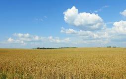 Campo de trigo y cielo nublado hermoso, Lituania Foto de archivo libre de regalías