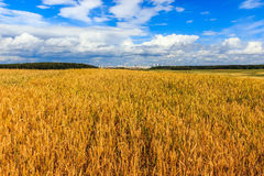 Campo de trigo y paisaje del sitybackground Imagenes de archivo