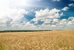Campo de trigo y paisaje del verano del cielo azul Imágenes de archivo libres de regalías