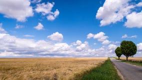 Campo de trigo y un cielo azul fotografía de archivo