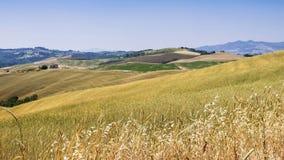 Campo de Tuscan Foto de Stock Royalty Free